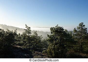tôt, vallée, sur, brouillard, matin