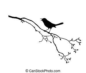 t, oiseau, branche, silhouette