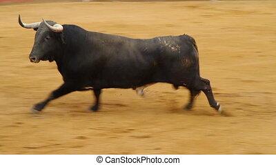 taureau, ar, puissant, corrida, espagnol