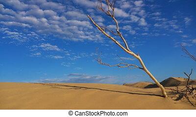 temps, désert, genoux