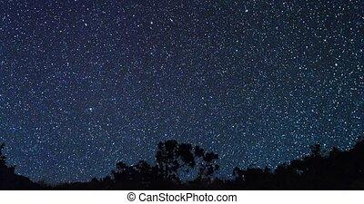 temps, derrière, défaillance, ciel, étoilé, zoom., arbres.