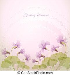 tendre, printemps, flowers., violet, backg