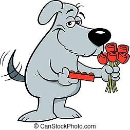 tenue, chocolats, sourire, boîte, roses., bouquet, chien, dessin animé