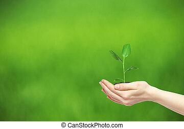 tenue, plante, mains, vert