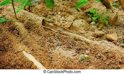 termite, abri, terrestre, séparément, tube, déchirure