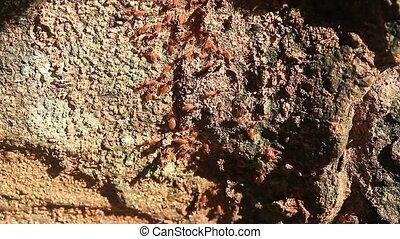 termite, exotique