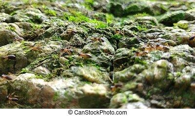 termite, marche, rocher, mousse, groupe