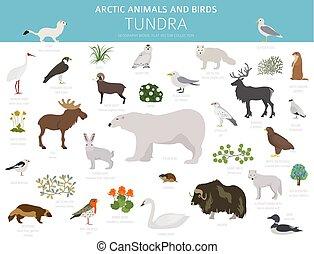 terrestre, biome., écosystème, arctique, map., toundra, infographic, conception, mondiale, animaux, oiseaux