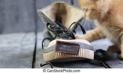 texte, noël, joyeux, chaton