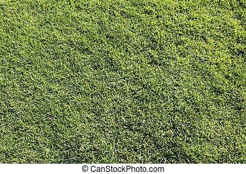 texture, herbe
