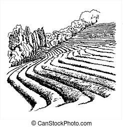 thé, vecteur, -, plantations, illustration