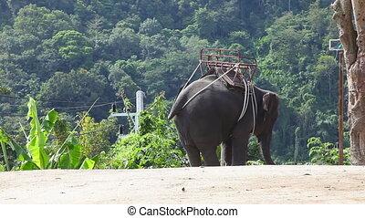 thaï, taxi.