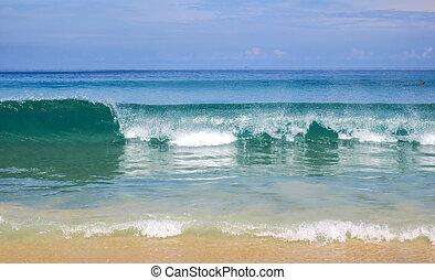 thaïlande, élevé, karon, phuket, sur, voler, vague, plage, papillon