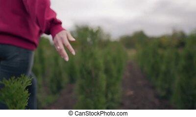 thuja, femme, protéger, concept, nature, amour, sommets, beau, main, seedlings, close-up., touchers, ground., biosphère, conifère, mouvement, culture