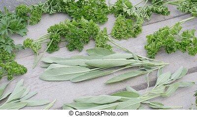 thyme., sauge, arrière-plan., nourriture, persil, épice, sécher, frais, verdure, bois, feuilles, herbes, bureau