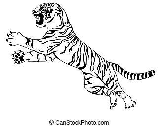 tigre, blanc