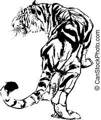 tigre, dessin