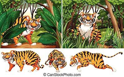 tigres, forêt, profond