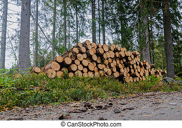 timberstack, côté route, impeccable, arbres