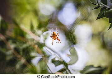 toile araignée, orange, centre, arthropode
