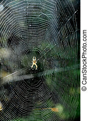 toile, araignés, centre