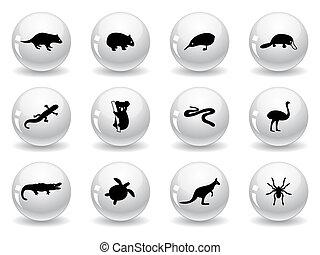 toile, australien, boutons, icônes animales
