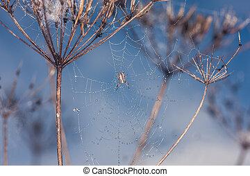 toile, centre, araignés