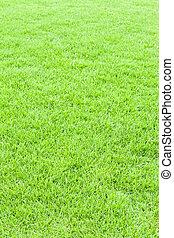 toile, herbe, texture, vert