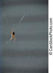 toile, patiemment, attente, araignés, centre