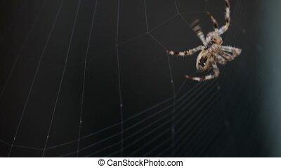 toile, rotation, araignés