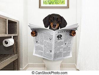 toilette, journal, siège, chien, lecture