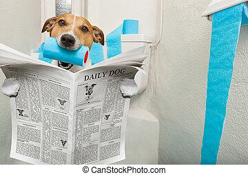 toilette, siège, chien
