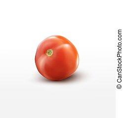 tomate, blanc, vecteur, isolé, fond