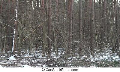 tomber, forêt arbre