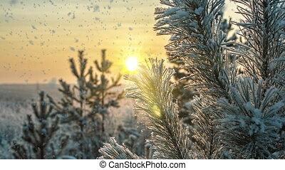 tomber, forêt, boucle, cinemagraph., nature, mood., neige, ensoleillé, hiver, clair, temps, paysage, jour, blanc, vidéo, lumière, arbres, froid, boucle