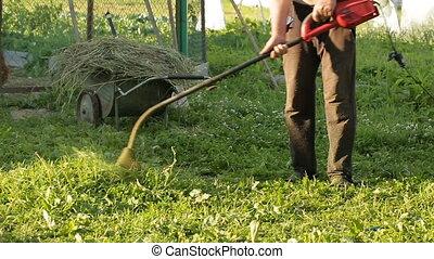 tondeuse, herbe, fauchage