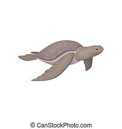 tortue, animal mer, illustration, vecteur, fond, blanc