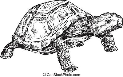 tortue, dessiné, main