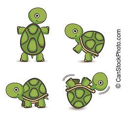 tortue, ensemble