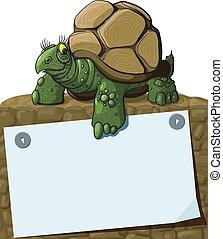 tortue, intelligent