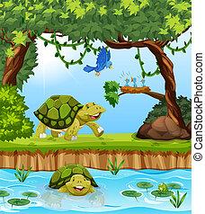tortue, jungle