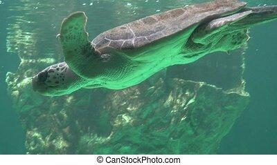 tortue, sous-marin, mer, natation