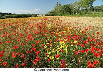 toscan, campagne, beauté