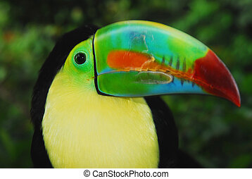 toucan, 5