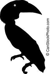 toucan, blanc, silhouette, oiseau, fond