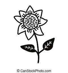 tournesol, fleur, isolé