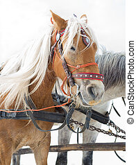 traîneau, cheval, transport, attraction touristes, alternative, hiver