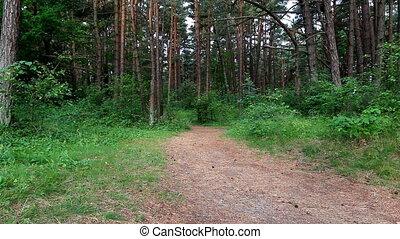 traîner courir, femme, forêt