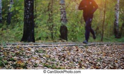 training., courant, bois, forêt, homme
