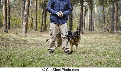 training., race, chien, entraîné, sheepdog